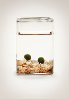 Luck in a Bottle - Marimo Moss Ball Aquatic Terrarium on Etsy, $27.00