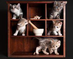 (^^)v(*^^*)(^^)Kiten Display Cabinet