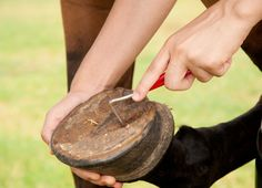 Are You Making One of the Most Common Hoof Care Mistakes?