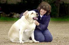 Base da amizade entre humanos e cães está nos hormônios, diz estudo | INFO