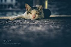 What do you want? by evanturennout #animals #animal #pet #pets #animales #animallovers #photooftheday #amazing #picoftheday