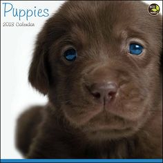 Puppies Wall Calendar: How can you say no to all these cute faces? Bring home a new playful pup each month—we promise they are house broken and will never grow up! Dog breed identification included.  http://www.calendars.com/Puppies/Puppies-2013-Wall-Calendar/prod201300002516/?categoryId=cat00339=cat00339