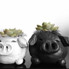 We're succulent pigs <3