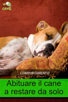 Maltese, Pitbulls, Dog Cat, Amelie, Nepal, Puppets, Animals, Home, Pictures