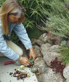Planted Pockets Give Life to Stone Walls Fill cracks and crevices with drought-tolerant plants for a been-there-forever look by Jeni Webber Succulent Rock Garden, Rock Garden Plants, Garden Soil, Succulents Garden, Garden Landscaping, Garden Path, Cactus Planta, Cactus Y Suculentas, Fine Gardening