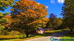 Recently at the Springbook Farm. One of the few places that had vibrant foliage.   #foliage #fallfoliage #vermont #newenglandphotography #newengland #landscape #newengland_photography #ScenicVermontPhotography #ScenicVermont #VT #welovermont  Feel free to visit my website - http://ift.tt/2aTNg7U