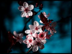30 Vibrant Examples of Spring Photography   PSDFan