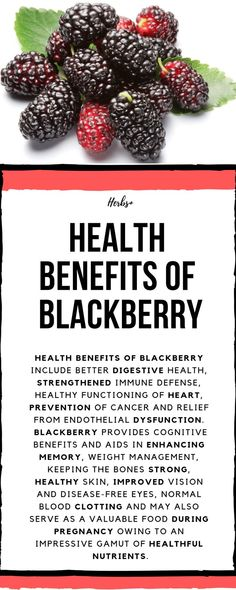 Health benefits of blackberry include better digestive health, strengthened immune defense, healthy functioning of heart, prevention of cancer and relief from endothelial dysfunction. Blackberry provides cognitive benefits and aids in enhancing memory, weight management, keeping the bones strong, healthy skin, improved vision and disease-free eyes #blackberry #health #healthbenefits #food #healthcare #vitamins #fruits #cancer #homeremedies #healthy #healing
