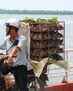 Traversée en ferry vers lîle de Con Dai - Delta du Mékong #Vietnam ©Voyages Insolites