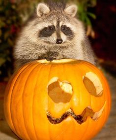 Animais se 'preparam' para o Halloween; veja imagens