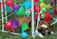 Image result for puppy adventure box