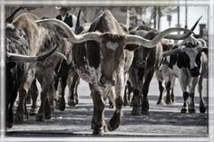 """Check out my art piece """"Watercolor Longhorns"""" on crated.com"""