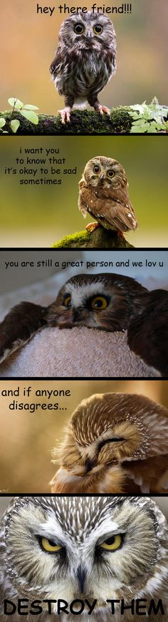 Wise words from Mr. Owl.