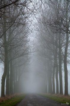 Path of fog, South Holland, Netherlands