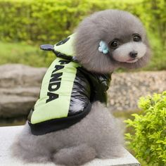 Chubasquero para perro, moderno y original, acolchado para protegerle también del frío.