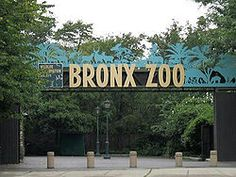 Bronx Zoo. I love this place, makes me feel like a kid again. Growing up in the Bronx meant a school trip to the Zoo every year.