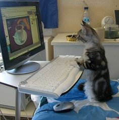 Cats n' Computers - Love Meow the I cat :)