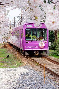 Sakura train in Kyoto Kyoto, Beautiful World, Beautiful Places, Trains, Japan Train, All About Japan, Bonde, Go To Japan, Sakura