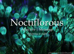words: noctiflorous