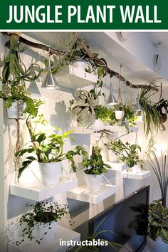 DianaMSwe put up this jungle plant wall as a great way to enjoy and display houseplants. #Instructables #home #decor #airplant #upcycle Air Plants, Indoor Plants, Plant Wall, Houseplants, Diy Furniture, Home And Garden, Display, Table Decorations, Pictures
