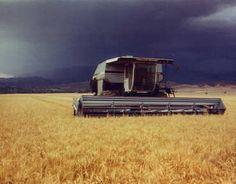 Farm Equipment For Sale: 1984 N-6 GLEANER COMBINES (3) 1982 N-7 GLEANER