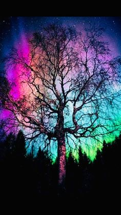 Aurora Treealis - Damn nice northern lights, so I decided to view them behind a tree. Beautiful Sky, Beautiful Landscapes, Beautiful Places, Beautiful Lights, Galaxy Wallpaper, Nature Wallpaper, Aurora Borealis, Nature Pictures, Night Skies