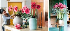 Flower Export News Item Amaryllis flower of the month December