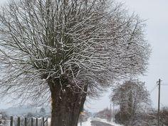 Blick von Neu Dessau in Richtung Milow Im Winter