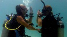 Dive Courses Travel Tours, Scuba Diving, Oriental, Activities, Concert, Diving, Concerts