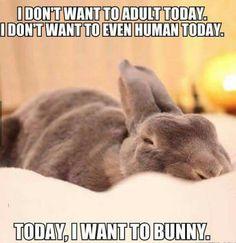 I want to Bunny