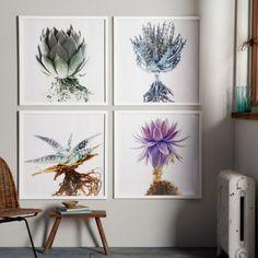 Stunning succulent wall art photography