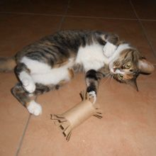 Catster DIY: 5 Cat Toys I Made from Empty Toilet Paper Rolls