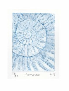 Etching no.23 of an ammonite fossil in an edition of 100 £30.00