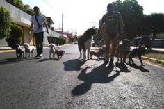 Agencia de Paseos caninos en Oaxaca, ideal para tu mascota