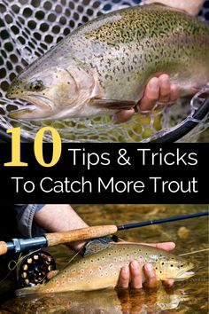 Trout Fishing Tips, Fishing Rigs, Fishing Bait, How To Catch Trout, Trout Bait, Fishing For Beginners, Brown Trout, Rainbow Trout, Rivers