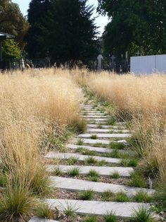 Loose stone pathway lined with grass - Garden of Giants by Mutabilis Landscape Architecture Urban Landscape, Landscape Design, Boulder Landscape, Landscape Grasses, Evergreen Landscape, Landscape Rake, Landscape And Urbanism, Garden Paths, Garden Landscaping
