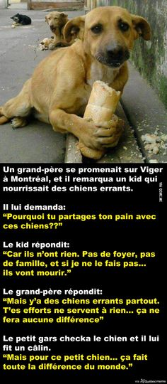 Nourrir les chiens errants Animals And Pets, Funny Animals, Cute Animals, Happy Stories, True Stories, Happy End, Amor Animal, Bad Mood, Faith In Humanity