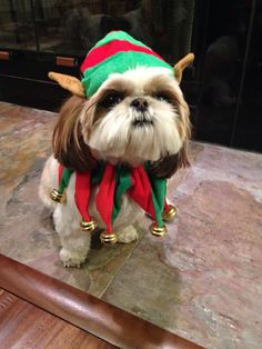 Chloe the Christmas elf - Jesse and Carlee have the same outfit :)