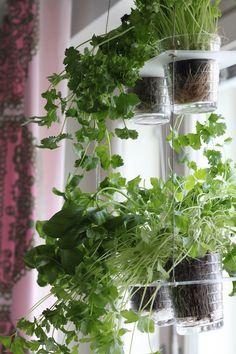 shelf for herbs / mutsiavautuu.com