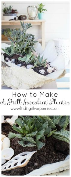 How to Mak a Shell Succulent Planter