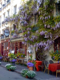 """Restaurant """"Au vieux Paris d'Arcole"""", 24 rue Chanoinesse, Paris 4e, France. Beautiful Wisteria :))"""