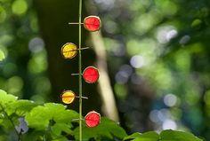 5 Coloured Leaf Circles (Richard Schilling Land Art)