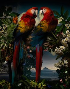 Joseph McGlennon is the recent recipient of Australia's prestigious William and Winifred Bowness Photography Award for his photograph titled, Florilegium #1.