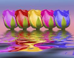 ~~ Roses Rising ~~ Tom McNemar