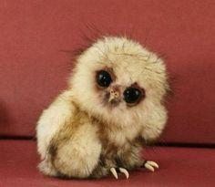 Eu quero uma