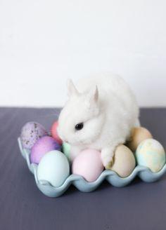 bunny relaxing on easter eggs. hippity hoppity.