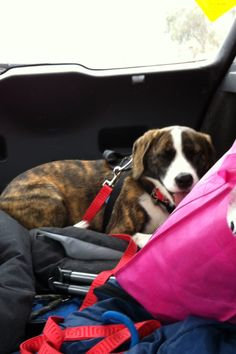 Missy going to her new home xx