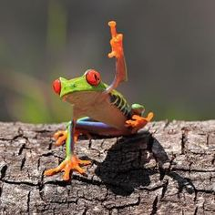 """I have a question"" - Tree Frog"