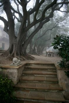 Stone steps to great old trees and table set for company.