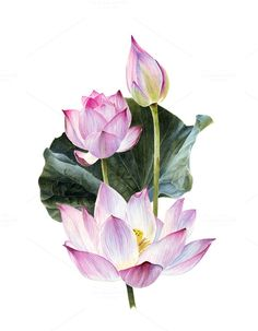 Watercolour lotus with leaves on @creativework247